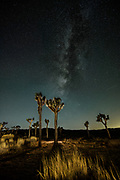 Joshua Tree National Park night sky