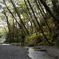 The trailhead of Fern Canyon, a canyon in the Prairie Creek Redwoods State Park in Humboldt County, California, USA. It was one of the shooting locations of the movie Jurassic Park 2: The Lost World.
