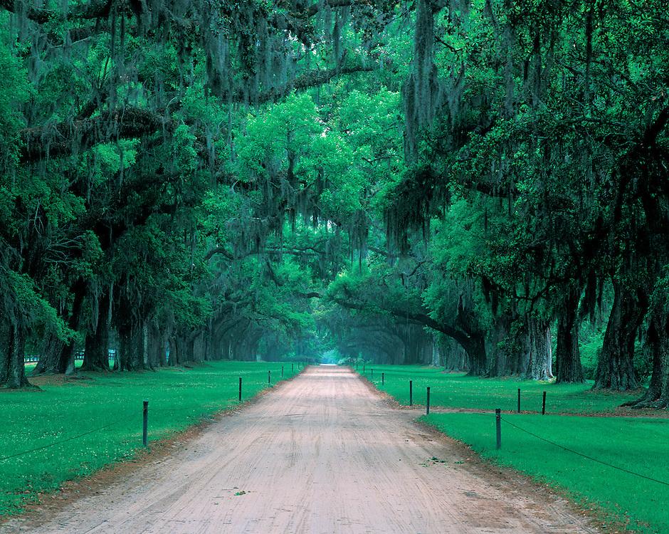 Road Boone Hall Plantation And Gardens An Antebellum