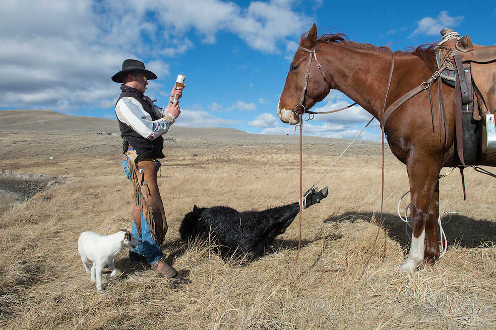 "Stephen Becklund, a cowboy at the J Bar L ranch in the Centennial Valley of southern Montana, ropes cattle on a chilly November day. The J Bar L ranch finish their cattle on grass, in contrast to the vast majority of ranches in the U.S. that send cattle to feedlots. The 2,000 head at J Bar L ""never go into a feedlot,"" said Bryan Ulring, manager of the ranch. He added that the J Bar L is one of the biggest grass finishers in the state. The Centennial Valley is an important wildlife corridor for elk, moose, antelope, deer, wolverines, grizzly bears, wolves and hundreds of bird species. The valley is largely owned by a handful of large ranches, which means their use of the land impacts the local environment. © Ami Vitale"