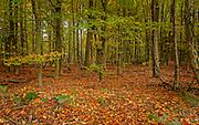 rural landscape, boswachterij Nunspeet, Gelderland, the Netherlands