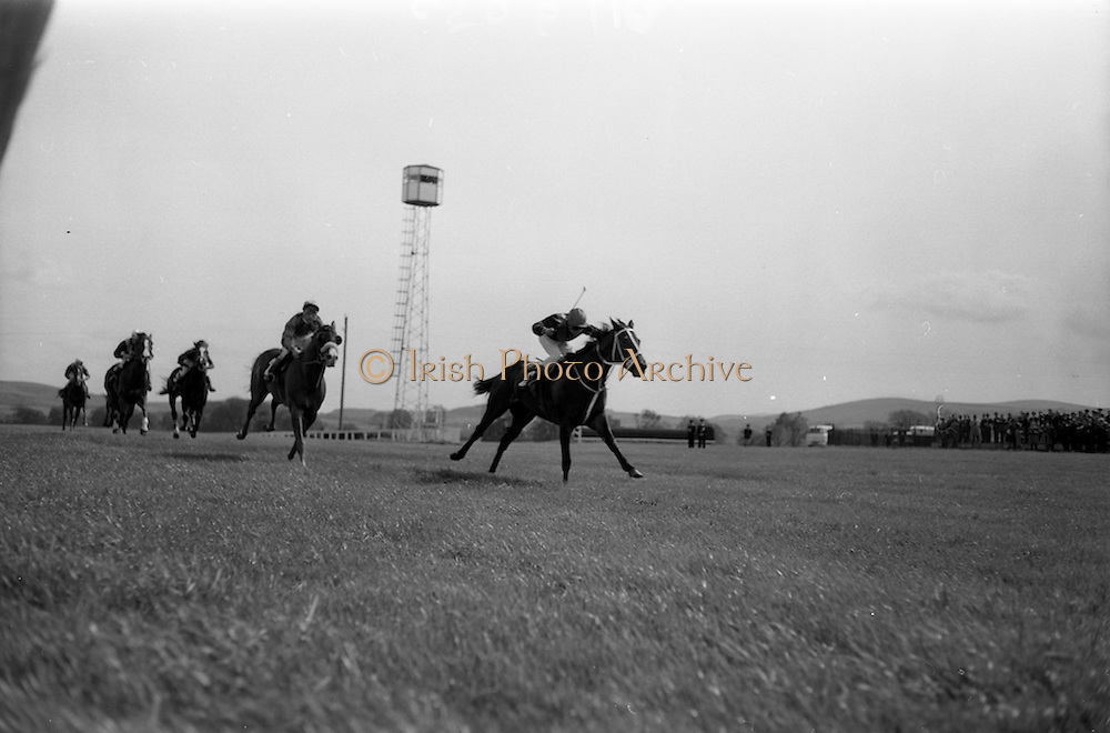 """08/05/1965<br /> 05/08/1965<br /> 08 May 1965<br /> The 1965 Gold Flake Meeting at Leopardstown Racecourse, Co. Dublin. Image shows Mr A.J. Russell's """"Scotch Corner"""",(J.M. Murtagh up) winning the Bristol Handicap from """"Fighting Spirit"""" (owned: J. O'Connell) and """"Gambetto"""" (N. Brennan up, owned Jack White)."""