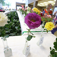 A pair of roses wait to be judged at Thursday's annual rose show held at Renasant Bank in downtown Tupelo.