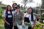 Los Angeles, California: Trainees of Homegirl Cafe, a part of Homeboy Industries harvest  vegetables for use in the restaurant, at the Solano Canyon Community Gardens. Kristi and her crew (Photo: Ann Summa).