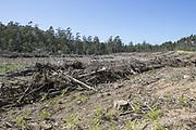 Logging area<br /> Tasmania, Australia