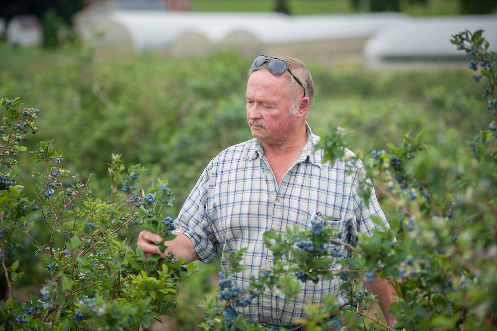 Farmer in his blueberry patch