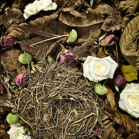 small bird nest made from grass and twigs surrounded by autumn leaves and flowers