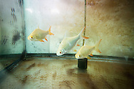 fish tank in Chiang Mai Thailand