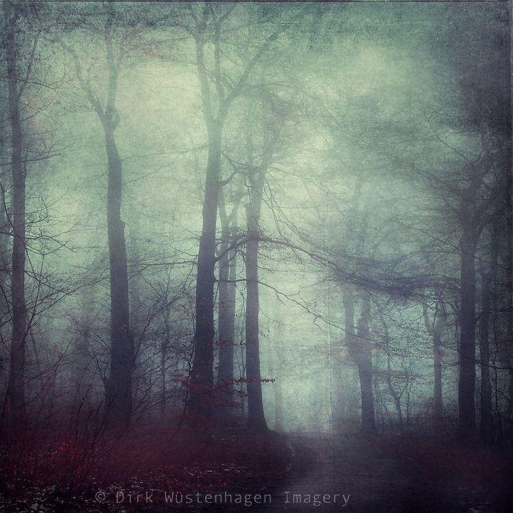 Path through a misty forest - textured photograph