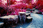 Lichen covered stones line a path through the succulent garden in the arboretum of Golden Gate Park, San Francisco.  Shot with.color infra red film.