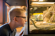 Taylon Walker gets up close and personal with a rattlesnake in one of the many kid-friendly exhibits at the Douglas County Museum in Roseburg, Oregon.