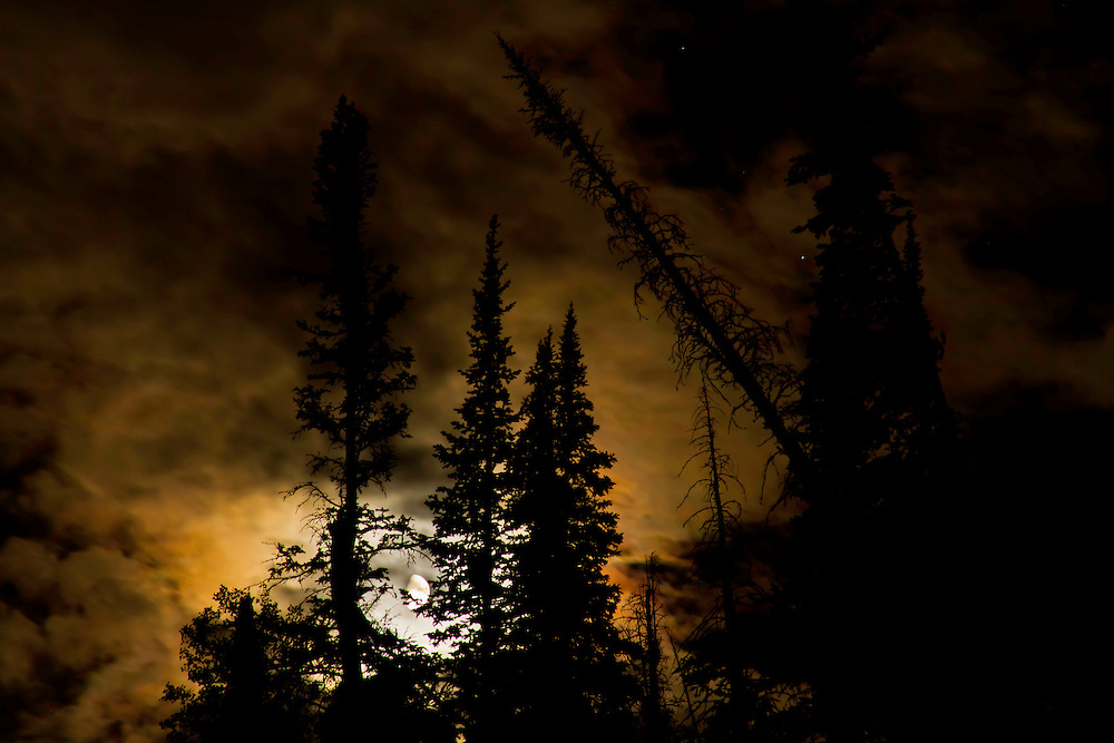 A full moon moves behind the trees near Duck Fork Lake in Utah.