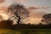 Partial silhouette of a tree next to Hamp Brook, near Bridgwater, just before sunset.
