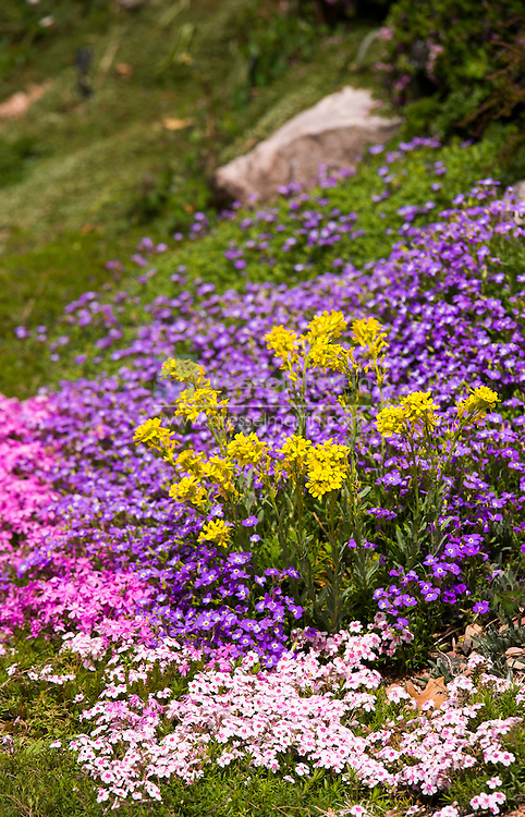 rock alpine garden in spring