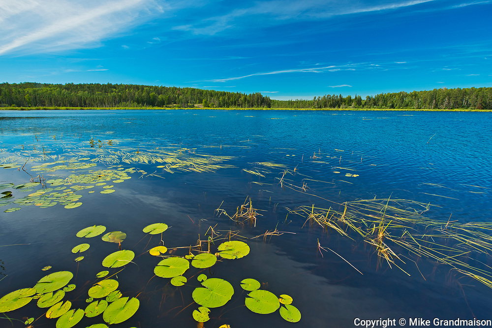 Water lilies on Old Woman Lake<br />