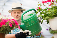Middle-aged man watering flower plants in greenhouse