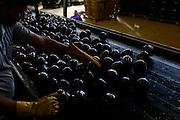 Sao Gotardo_MG, 29 de abril de 2015<br /> <br /> Fotos dos produtores de beterraba na regiao de sao gotardo.<br /> <br /> Foto: MARCUS DESIMONI / NITRO