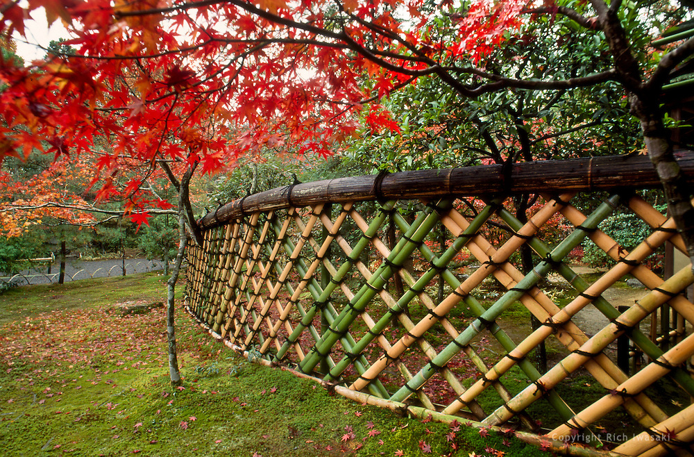 Detail of Koetsu-style bamboo fence in autumn, Koetsu-ji (temple), Kyoto, Japan. The temple and curved fence are named after master craftsman and artist Hon'ami Koetsu (1558-1637)