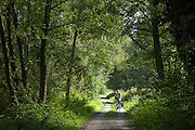 Radfahrer, Weg durch die Mainauen Auwald am Main bei Aschaffenburg, Bayern, Deutschland.|.forest near river Main near Aschaffenburg, Bavaria, Germany