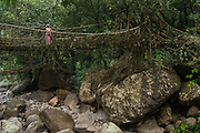 Living bridge or Root bridge (Ficus elastica) & Khasi woman<br /> Khasi Tribe<br /> Nongriat, Khasi Hills<br /> Meghalaya, ne India<br /> Range: South China, NE India, Burma