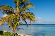 Palm trees and a white sand beach near the Lux le Morne Hotel, on the Le Morne Peninsula Mauritius, The Indian Ocean