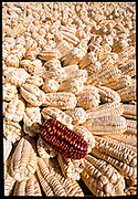 Corn, Cusco, Peru, 2003