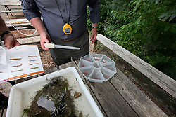 UK ENGLAND ENGLAND SHROPSHIRE LLANYBLODWEL 1JUL15 -  Details of the finds from their monthly kick sampling in the river Tanat in Llanyblodwel, part of the river Severn catchment area.<br /> <br /> jre/Photo by Jiri Rezac / WWF UK<br /> <br /> © Jiri Rezac 2015