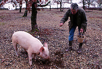 truffle hunter with his pig in southwest France