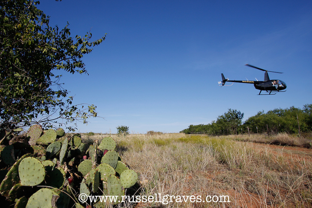 HELICOPTER FLYING OVER TEXAS RANGELANDS SEARCHING FOR BOBWHITE QUAIL