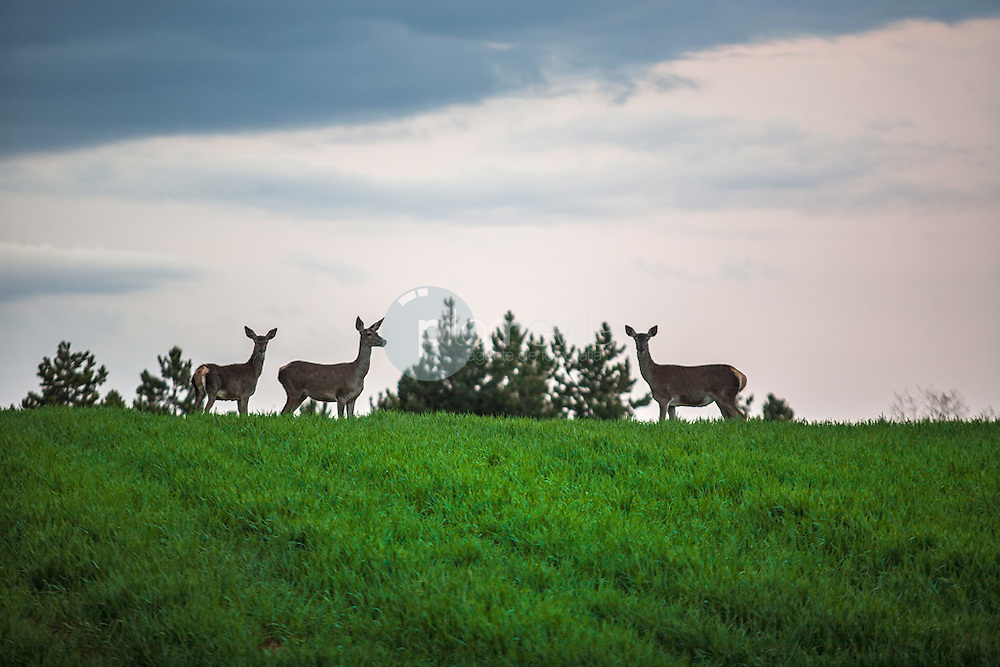 Ciervos. La Rioja ©Daniel Acevedo / PILAR REVILLA