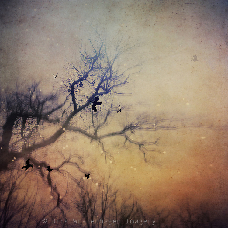 Multiple exposures of a naked tree and flying birds - manipulated photograph<br />