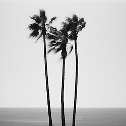 Palm trees and Pacific Ocean in Laguna Beach, CA.