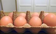 Nederland, Ubbergen, 19-4-2010Onze biologische kippen leggen elke dag een ei.Foto: Flip Franssen/Hollandse Hoogte