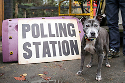 © Licensed to London News Pictures. 12/12/2019. London, UK. A dog at a polling station sign in Haringey, north London. Polling stations have opened as the nation votes to decide the next UK Government in the first December election since 1923. Photo credit: Dinendra Haria/LNP