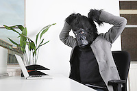 Angry young man in gorilla mask looking at laptop at office
