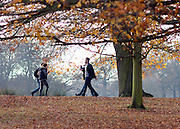 © Licensed to London News Pictures. 29/11/2014. Richmond, UK. People walk under the trees with a few leaves remaining on them.  People and animals enjoy the late Autumn sunshine in Richmond Park, Surrey, today 29th November 2014. Photo credit : Stephen Simpson/LNP