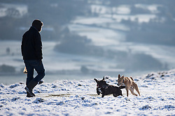 © Licensed to London News Pictures. 28/04/2016. Baildon UK. Picture shows dogs playing in the snow on Baildon as Yorkshire woke to a covering of snow this morning. Photo credit: Andrew McCaren/LNP