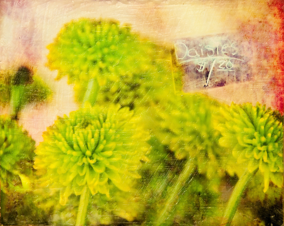 Daisies Photo-Encaustic Art 8x10""