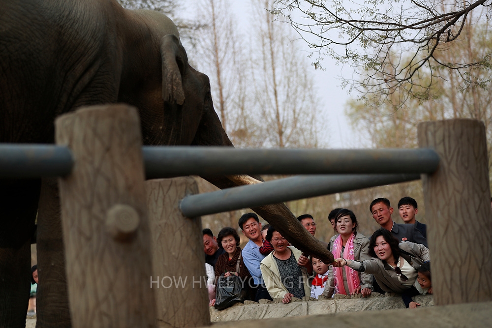 A picture made available on 17 April 2017 of a North Korean woman reaching out to feed an elephant in the Central Zoo in Pyongyang, North Korea, 16 April 2017. A North Korean missile exploded within seconds of its launch on the east coast on 16 April, South Korean and US officials say as tensions rise in the region over nuclear issues.