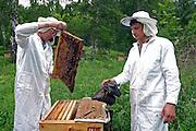 Honey production<br /> Paseka<br /> Duvanski region<br /> Republic of Bashkortosatan<br /> Russian Federation<br /> Client: UNESCO