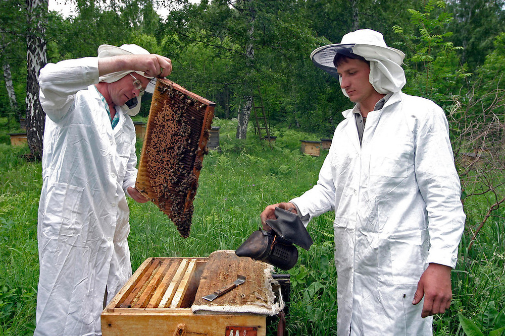 Honey production<br /> Paseka<br /> Duvanski region<br /> Republic of Bashkortosatan<br /> Russian Federation<br /> Client: UNESCO