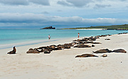 The sandy beach of Gardiner Bay at the island of Espanola (Hood), Galapagos. Normally hundreds of sea lions occupy this beach.