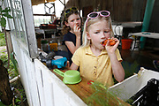 Keilah, 6, right, and her sister Abigail Schiebout, 8, chew on carrots while looking at a caterpillar at Millsap Farm during CSA harvest day on Tuesday, June 14, 2016. CSA members are required to work 12 hours on the farm.