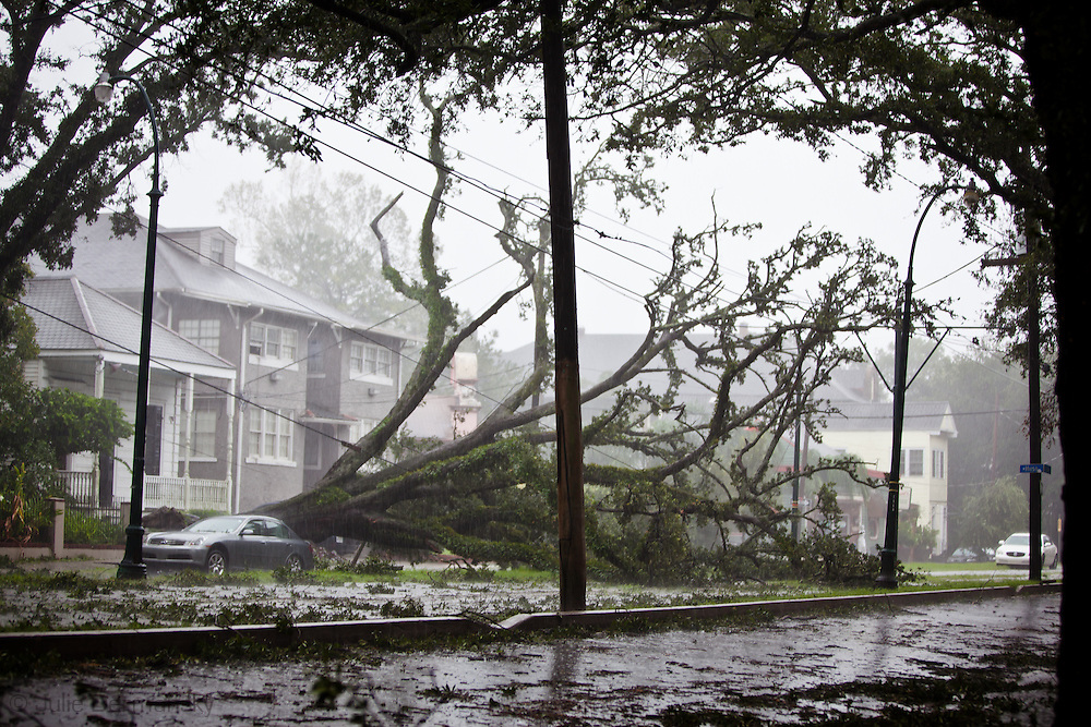 August 29th, New Orleans, Louisiana, Hurricane Isaac hits the city with wind and rain as a category one storm.Tree down on St. Charles Ave.
