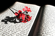 Red flower on Jewish religious book