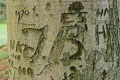 2005 Arborglyphs, Beschreven bomen.