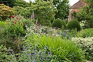 Rosa, Digitalis, Nepeta, Astrantia and Chamaecyparis lawsonia 'Fletcheri' (Lawon Cypress) in East Lambrook Manor Gardens, South Petherton, Ilminster, Somerset, UK
