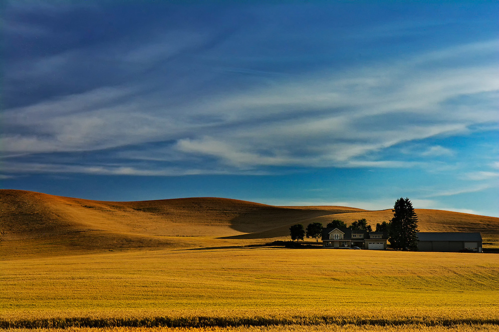 Wheat Fields, WA