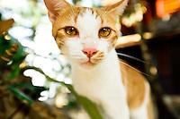 Feral cat in Roatan, Honduras.  Copyright 2010 Reid McNally.