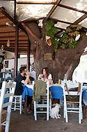 Myrivili's Mulberry Tavern in Skala Skamnias, Lesbos Island, Greece